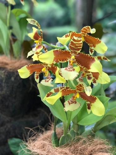 Orchids_1